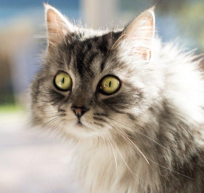 Мир глазами кошек: как вас видит ваша котейка