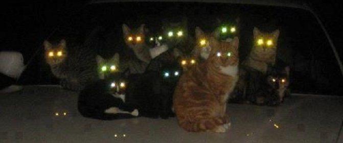 Мир глазами кошки