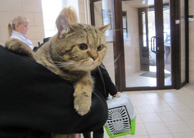 Как перевезти кошку в поезде по россии 2021