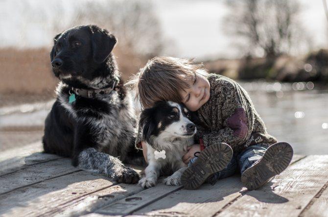 Множество самых удачных кличек для собак на нашем сайте