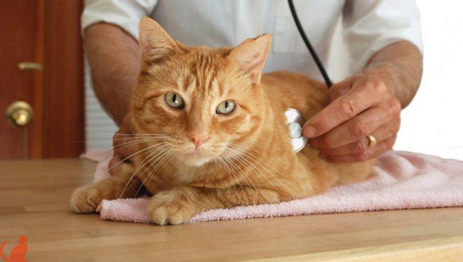 мочекаменная-болезнь-у-котов