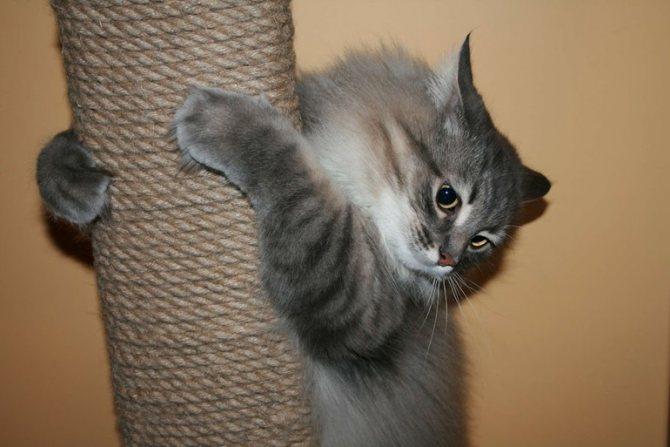 Модели из джута для кошек
