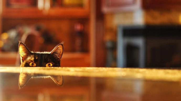модно отучить кота лазить по столам