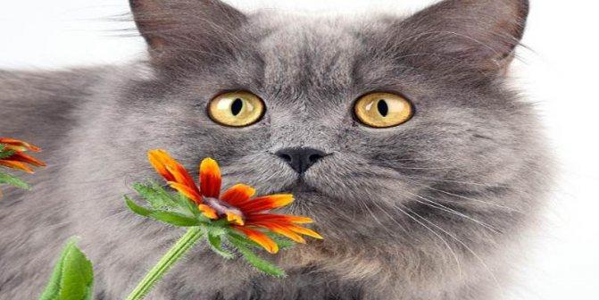 Мокнущая экзема у кошек симптомы и лечение в домашних условиях