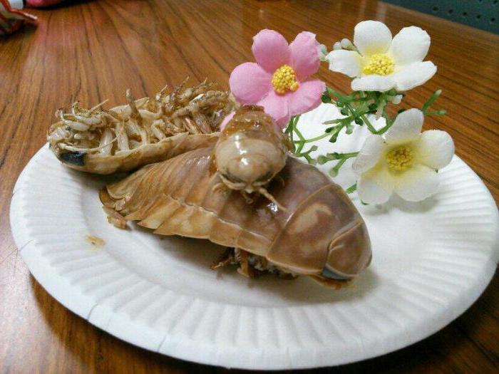 морской таракан съедобен