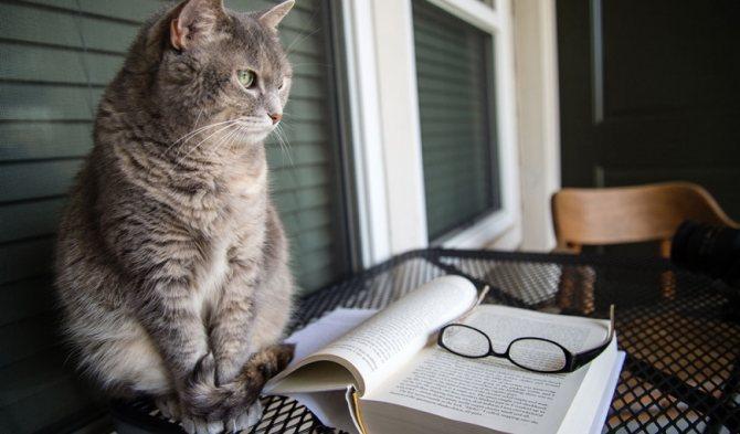 Мозг кошки: быстрее айфона, сложнее собаки
