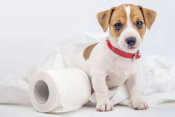может ли быть аллергия на собачью мочу