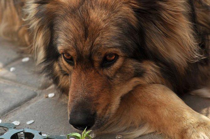 Можно ли давать собакам хлеб