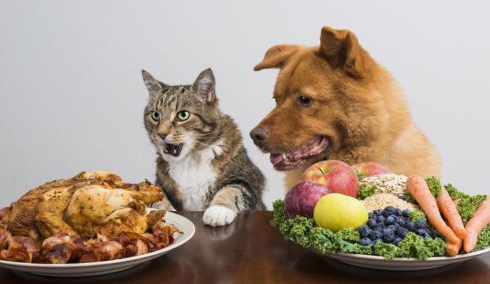 можно ли давать собаке кошачий корм