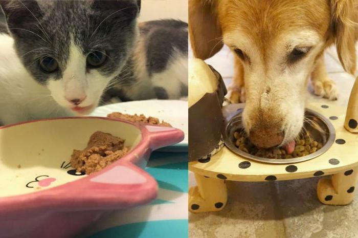 можно ли давать собаке кошачий мягкий корм