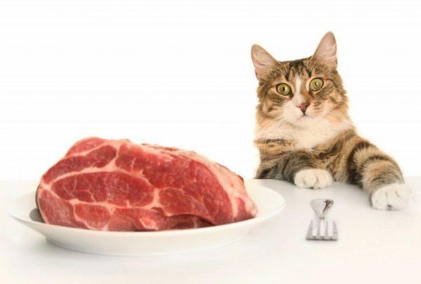 Можно ли давать сухой корм и мясо в одно время
