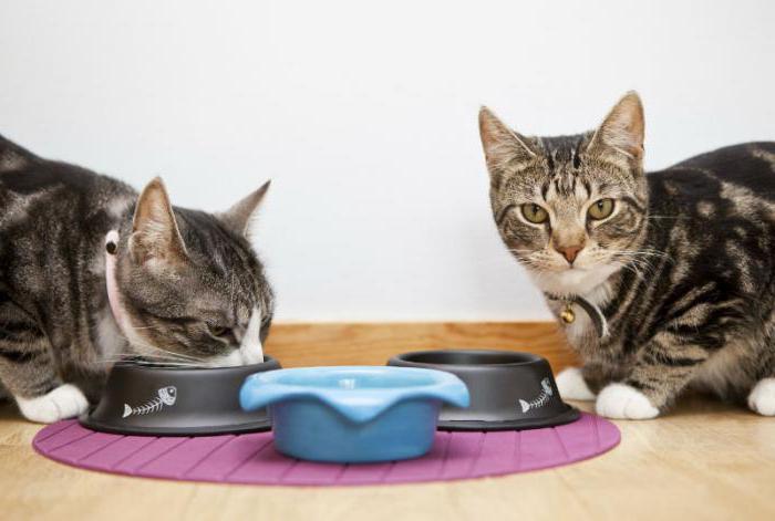 можно ли кормить кошку сухим кормом предварительно размоченным