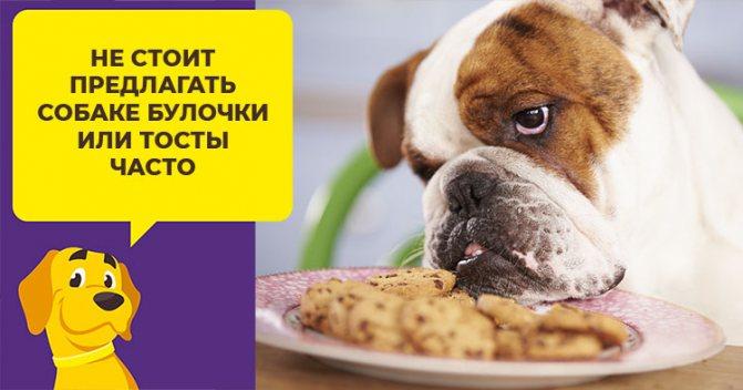 Можно ли кормить собаку хлебом: за и против