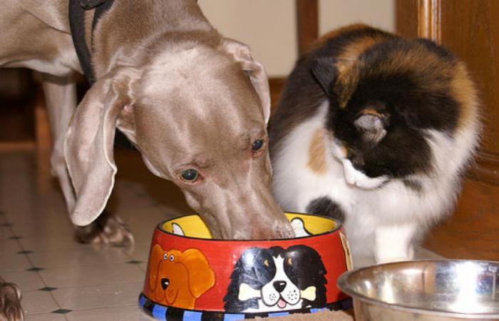 можно ли кормить собаку кормом для котов