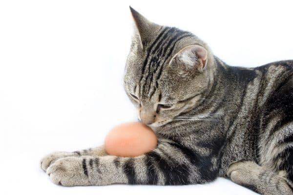 Можно ли котам давать яйца читайте статью