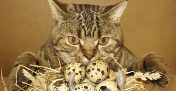 Можно ли котам давать яйца