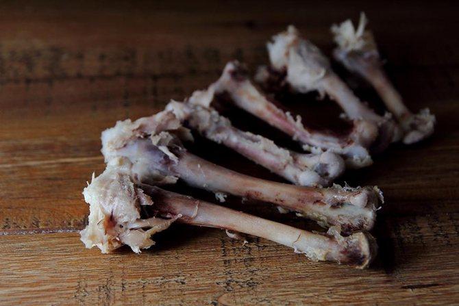 Можно ли коту давать куриные кости