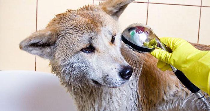 можно ли помыть собаку человеческим шампунем от вшей