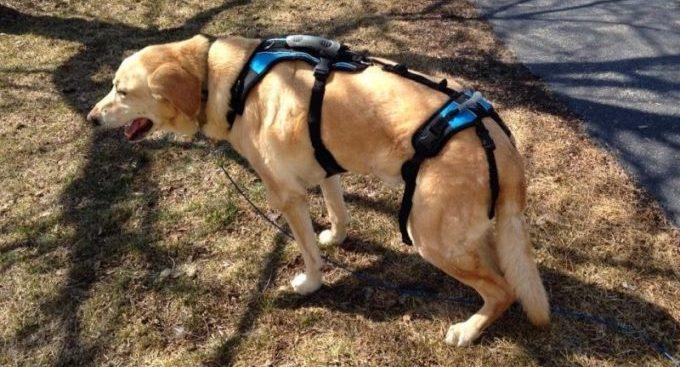 можно ли приостановить паралич ног у собаки
