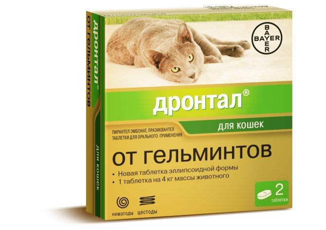Можно ли проглистогонить беременную кошку
