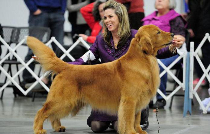 можно ли сделать родословную собаке без документов