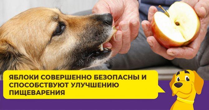 Можно ли собакам гранат, хурму, груши и другие фрукты