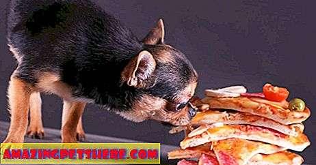 Можно ли собакам оливковое масло