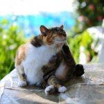 Можно ли заразиться вшами от кошки: вылечить, первые признаки, причины возникновения, рецепты