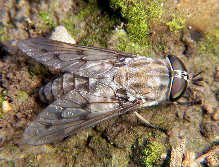 мухи кусаются или нет