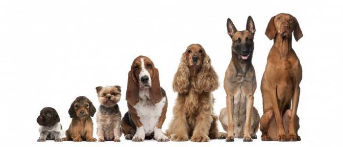 мультикан 8 инструкция по применению для собак
