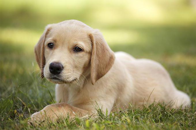 мультикан 8 инструкция по применению щенкам