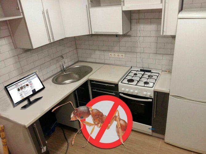 Муравей на кухне