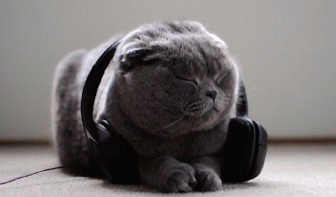 Музыка для кошек. Только для кошек!