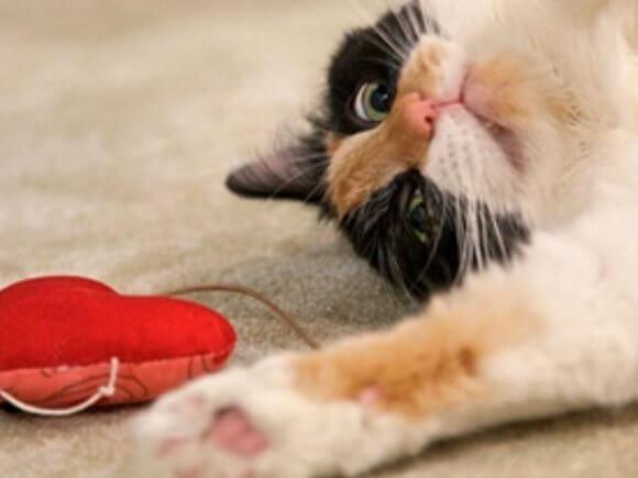Мышка-сердечко для кота - мастер класс