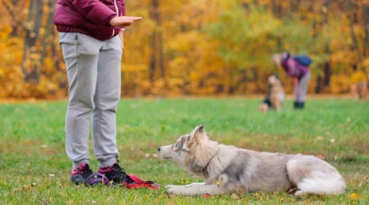 На что следует обратить внимание при дрессировке щенка