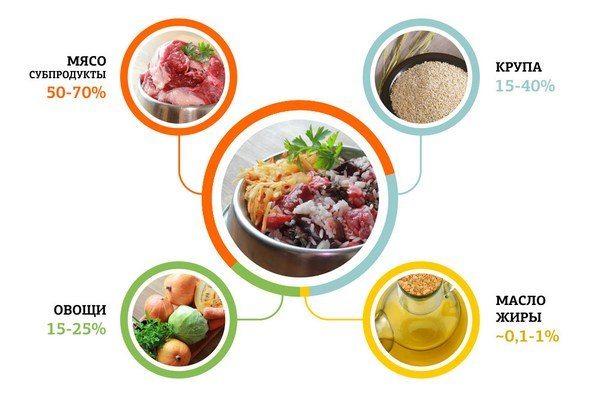 На время лечения необходимо кормить животное сырым и натуральным кормом