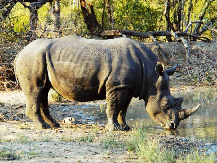 национальный парк африки серенгети