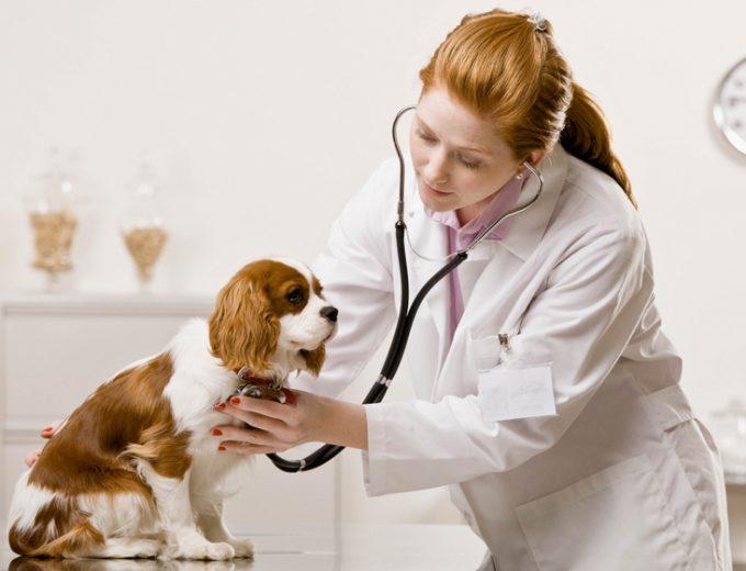 надо ли при энтероколите у собак диетическое питание
