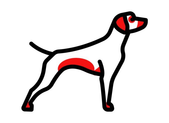Наиболее распространенные места проявления аллергии у собаки