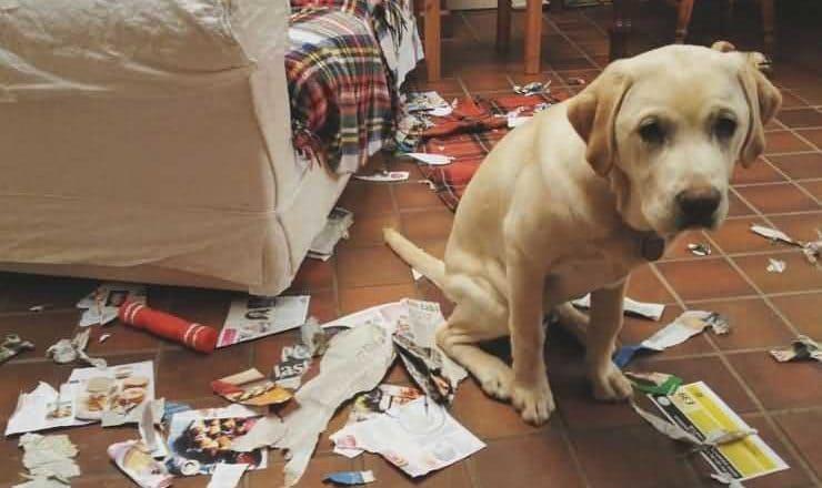 наказание собаки за порчу мебели и вещей