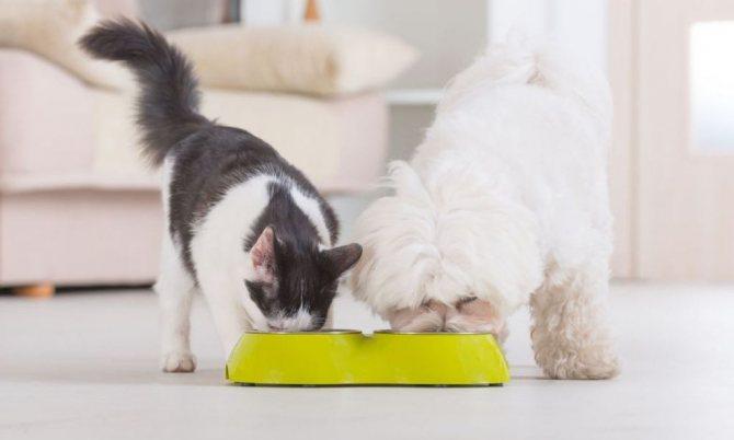 Наличие других животных в одном помещении может стать причиной закапывания еды