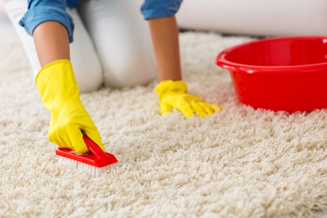 Нападение ковровых блох