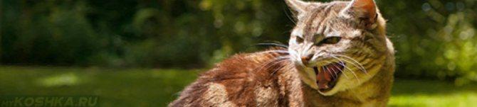 Народные средства чтобы кошка не просила кота