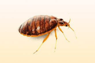 насекомые вызывающие аллергию