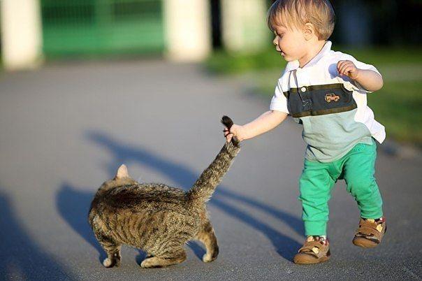Настроение кота по хвосту как понять