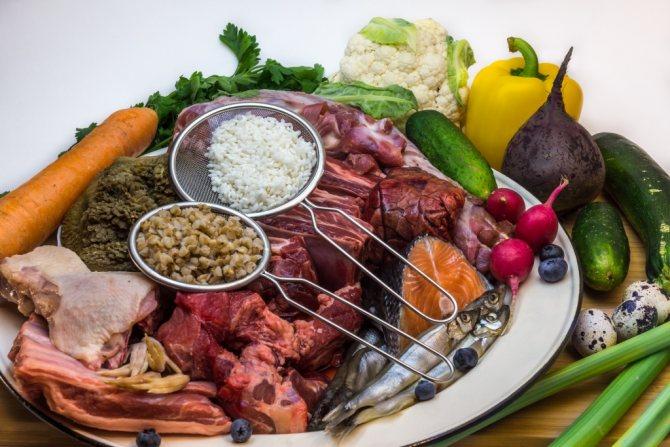 naturalka dlya malamuta1 - Чем кормить аляскинского маламута