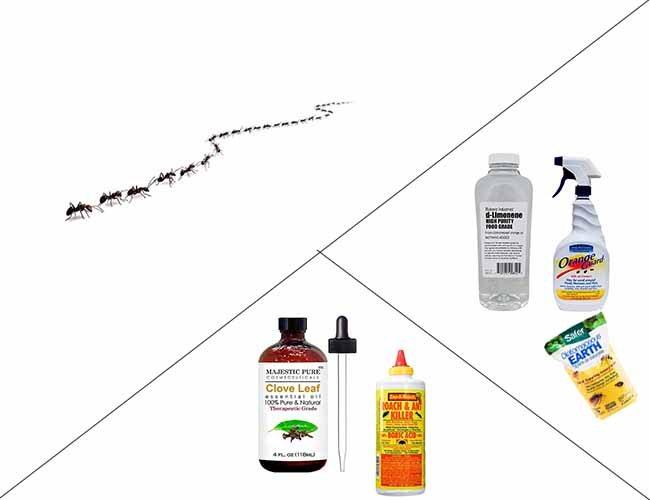 натуральные средства от муравьев: фото