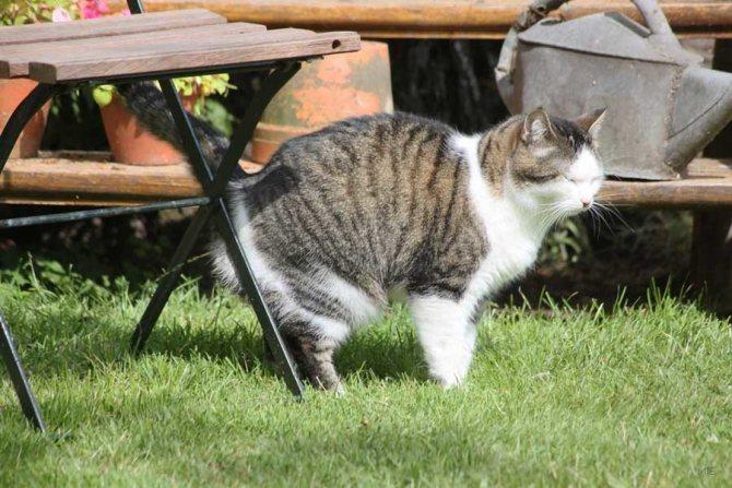 Научите кота справлять свою нужду во дворе, если живете в частном доме