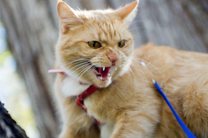 Не гладьте шипящего кота и не повышайте голос