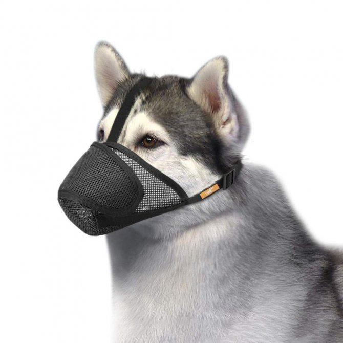Нейлоновый намордник для собаки